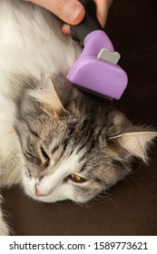 young woman grooming her domestic cat with furminator closeup view