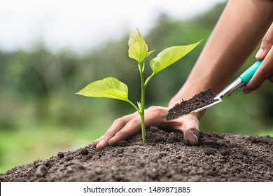 The young woman hand plants a tree  on black soil,World Environment Day.
