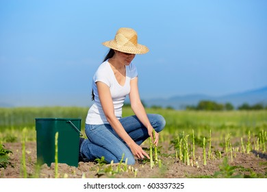Young woman at harvest of green asparagus