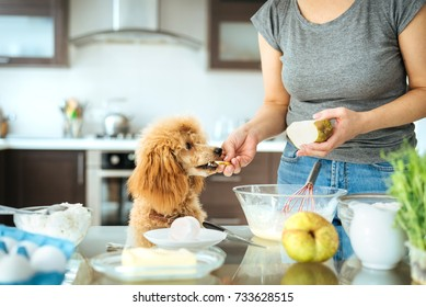 Young woman with her dog is cooking on the kitchen . Concept of cooking.