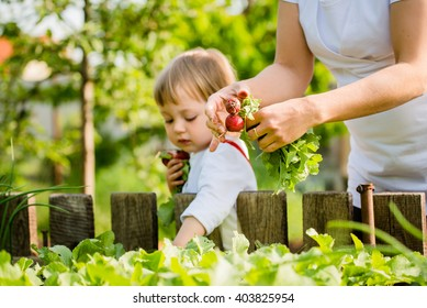 Young woman with her little girl picking up red radishes in backyard garden