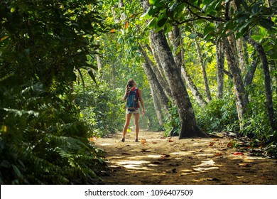 Young woman hiker stands in the tropical lush forest and looks at the trees