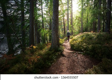 Young woman hiking along trail in forest with bright sun shining through canopy
