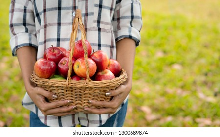 Young woman holding an apples in basket after picking from apple farm