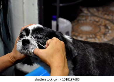 Young woman holding  scissors in hand and cutting dog's hair around eye area, blurred bathroom background, take care pet by yourself concept