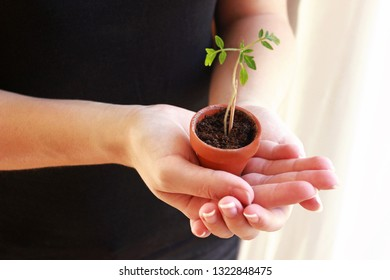 young woman holding a small potted tomato plant in her hands