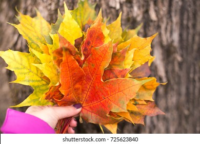Young woman holds a bouquet of multi-colored maple leaves