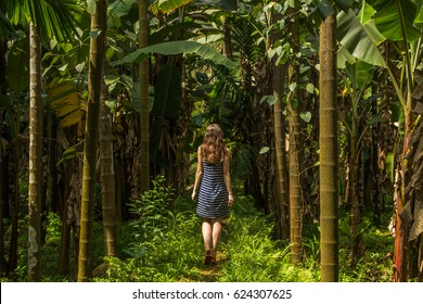 Goa Forest Images, Stock Photos & Vectors | Shutterstock