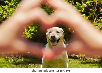 Young woman is making heart shape with her dog.