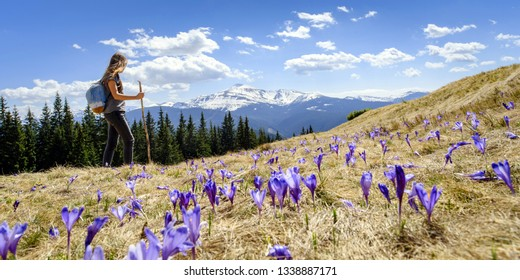 Young woman in mountains, and crocuses on top view, spring concept