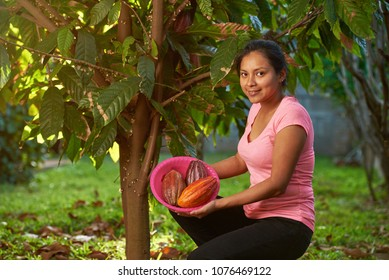 Young woman on cacao harvest in farm in latin america