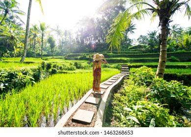 Young woman on green cascade rice field plantation at Tegalalang terrace. Bali, Indonesia - Beautiful female model posing at rice terrace in Ubud