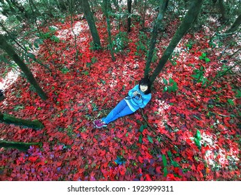 Young woman on red leave fall forest, Travel lifestyle concept, fallen red meple leaves,Phu Hin Rong Kla NP.Thailand