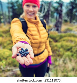 Young woman picking and hand giving blueberries in autumn fall or winter forest. Hiking and healthy lifestyle outdoors active in nature, handful blueberry food, background concept