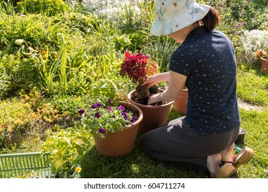 Young woman planting colorful coleus flowers into pots outside in summer traditional garden