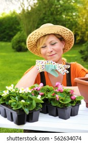 Young woman planting flower seedlings, gardening in spring, planting begonia flowers in pot, smiling woman working in garden