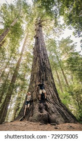 A young woman playfully scares a young man at the base of a tall, ancient Redwood tree in Northern California.