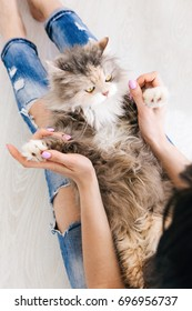 Young woman plays with fluffy cat laying on her knees. Charming family pets and people cosiness concept, view from above