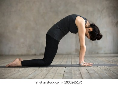 Young woman practicing yoga, doing asana paired with Cow Pose on the inhale exercise, Cat, Marjaryasana pose, working out, wearing black sportswear, indoor full length, gray wall in yoga studio