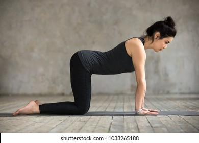 Young woman practicing yoga, doing asana paired with Cat Pose on the exhale exercise, Cow, Bitilasana pose, working out, wearing black sportswear, indoor full length, gray wall in yoga studio