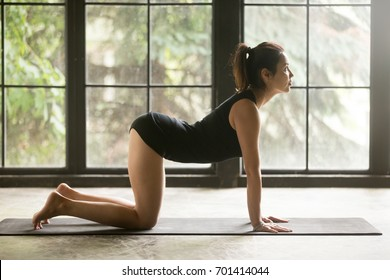 Young woman practicing yoga, stretching in Cow, Bitilasana exercise, asana paired with Cat Pose on the exhale pose, working out, wearing sportswear, black shorts, top, indoor full length, studio