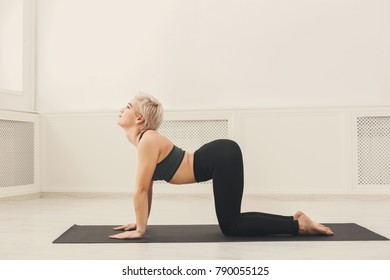 Young woman practicing yoga, stretching in Bitilasana exercise, asana paired with Cat Pose on exhale pose, working out, copy space