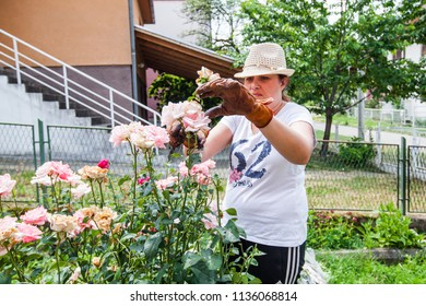 Young woman pruning roses with scissors in garden at summer day