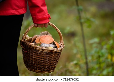 young woman in red jacket enjoying nature in sunny forest. gathering food for winter. holding basket with mushrooms. Latvia