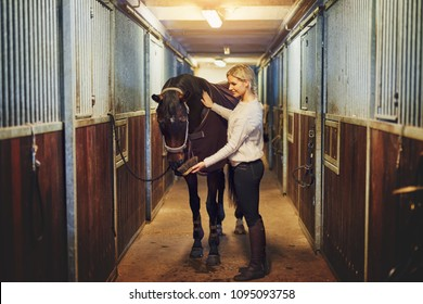 Young woman in riding gear readying her chestnut horse for a ride while standing inside a stable on a farm