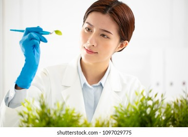 young woman scientist watching a plant