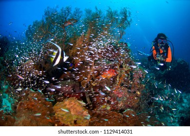 young woman scuba diving with healthy coral reef, full of soft corals, grows in the shallows near limestone islands in Raja Ampat, Indonesia.