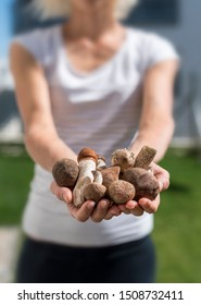 Young woman showing variety of edible wild mushrooms in her hands