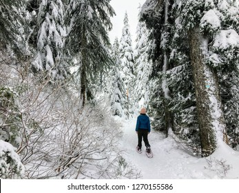 A young woman snowshoeing along the bowen island lookout trail on Cypress Mountain, British Columbia, Canada; walking in her snowshoes through freshly fallen snow along a beautiful old cedar forest