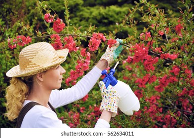 Young woman spraying tree in garden, the gardener takes care of the quince tree in orchard, holding spray bottle, happy young lady applying an insecticide or a fertilizer to her fruit trees