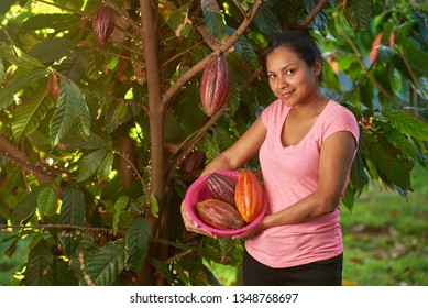 Young woman stand with cacao pods on cocoa tree background