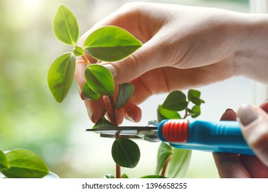 young woman taking care and growing plants, home garden concept, light background