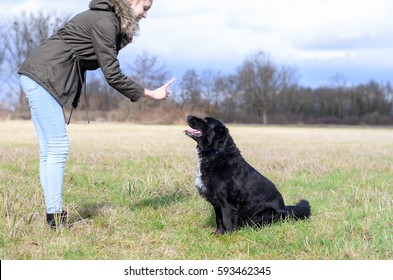 Young woman teaching her cute loyal black dog to sit and stay in an obedience class outdoors in a rural field gesturing the command with her finger, side view