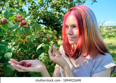 Young woman teenager picking ripe red raspberries from bush, healthy organic natural food, summer sunny garden background. Farming, agriculture, gardening concept.