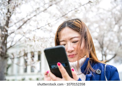 Young woman texting on a windy day in Washington DC Peak Bloom of the Cherry blossoms