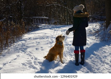 Young woman training her dog on a forest path with fresh snow and bridge