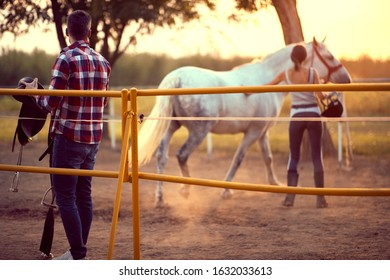 Young woman training a horse, while her man colleague prepares a saddle. Training  on countryside, sunset golden hour. Freedom nature concept.