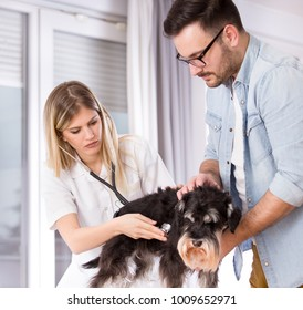 Young woman veterinarian listening heart of small dog with stethoscope in clinic. Pet health care concept