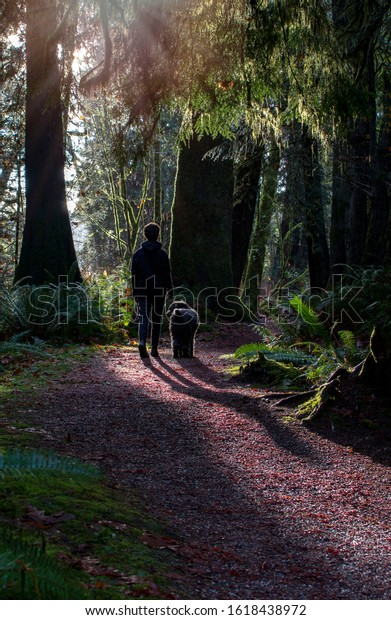 Young woman walking her dog on a forest path with the sun shining through the trees.