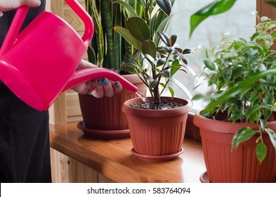 Young woman watering plant using colour plastic watering can