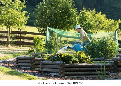 young woman watering raised vegetable beds with green peas in the countryside garden with orchard