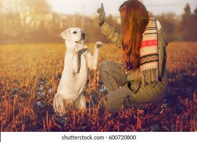 young woman and white labrador retriever dog during the training on a field