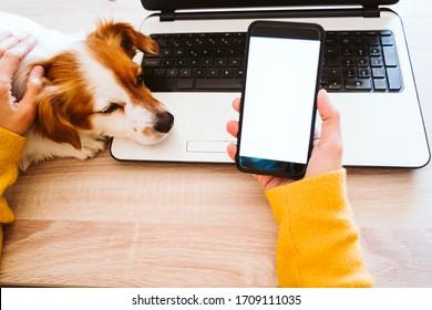 家でノートパソコンを作っている若い女性、保護マスクを着けている若い女性、その上かわいい小さな犬。自宅で作業し、コロナウイルスcovid-2019コンペントの間は安全