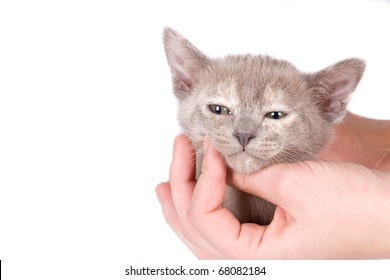 Young woman`s hand hold a kitten head on the white background