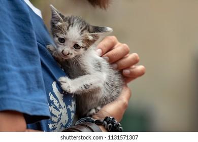 young women cuddles a kitten