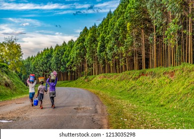 Young women, with filled shopping baskets on their heads, walking along a potholed bitumen road past a plantation of Blue Gums. Walking is a main mode of transport in rural Kenya. Eucalyptus saligna.